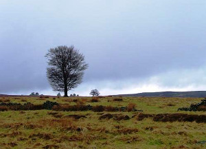 No Wi-Fi here? Isolated Tree, Cabin Hill in Richmondshire, North Yorkshire by Mick Garratt / Geograph.org.uk